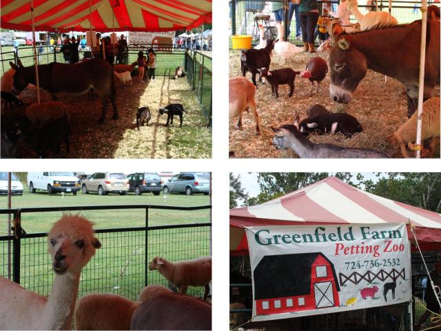 Covered Bridge Festival Petting Zoo