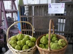 monkey balls spider balls