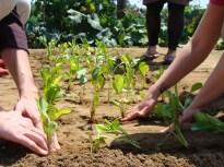 planting farm