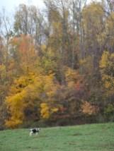 Fall Foliage Tour Coshocton Ohio 2012