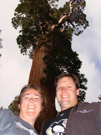 King's Canyon National Park, California sequoia tree