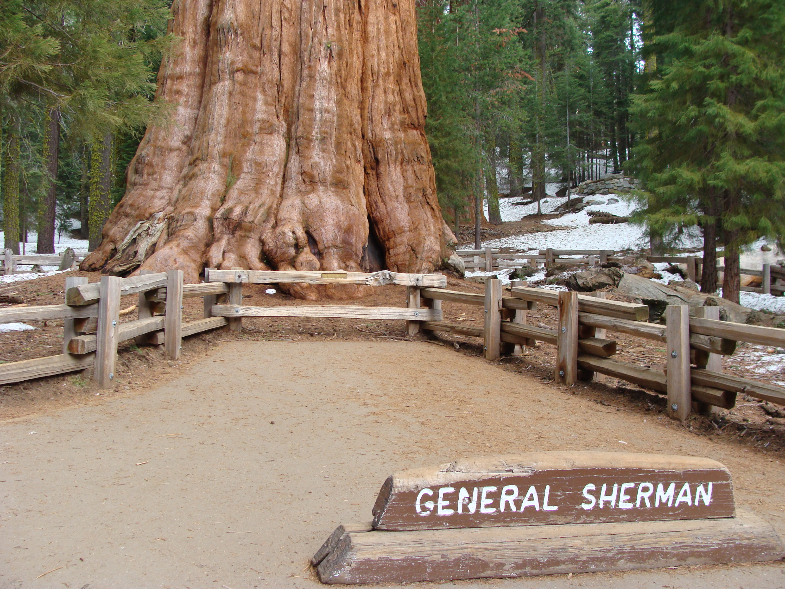 This legendary tree is not the tallest, oldest or widest, but it's one of the most famous sequoias and well worth a visit to the park.