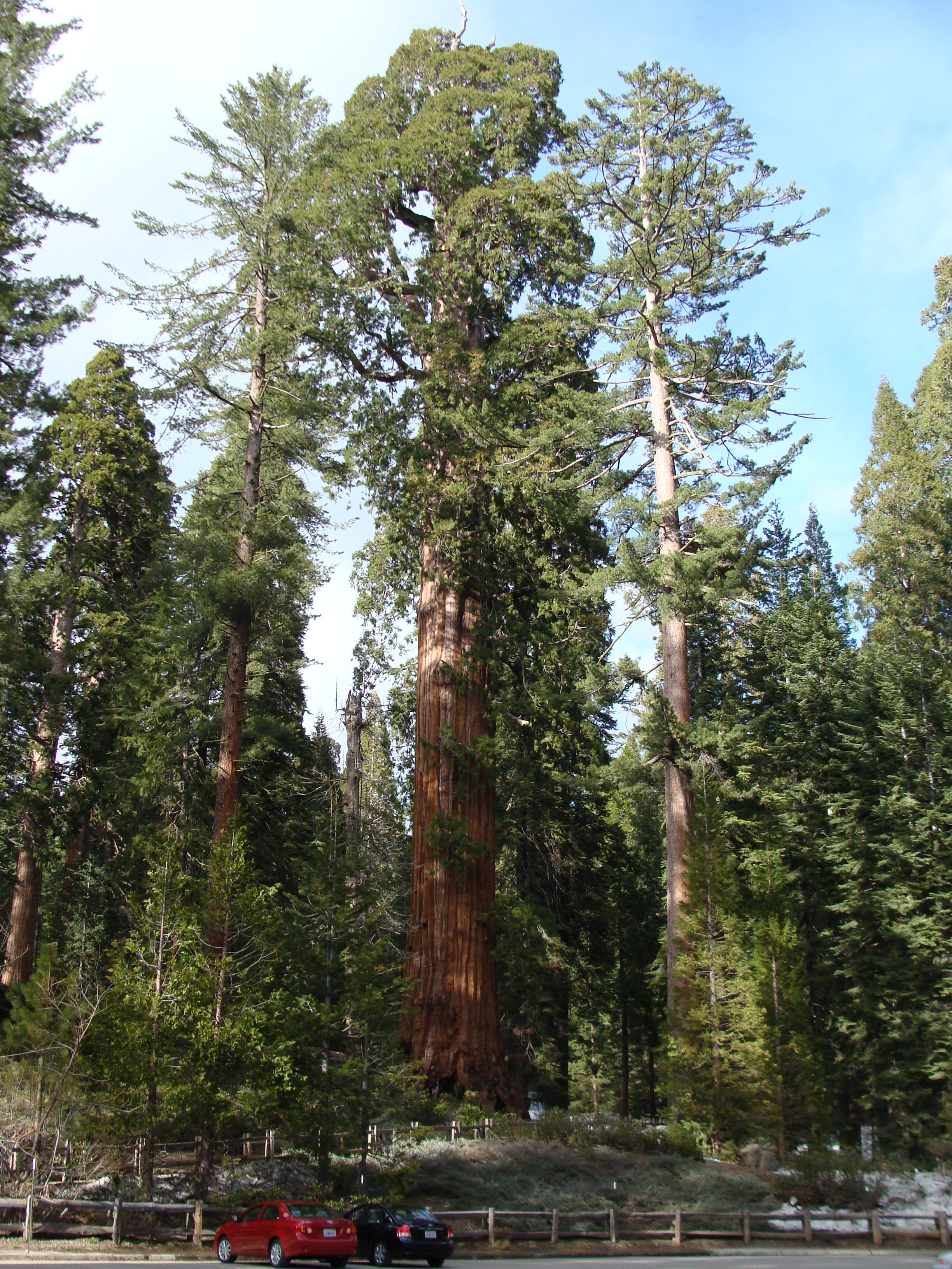 Sequoia National Park giant trees