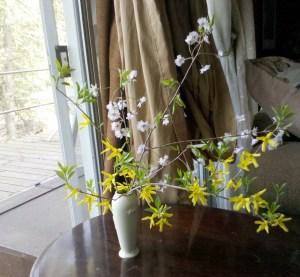 yellow bramble bush flower Pennsylvania spring weeping cherry cut vase pink flowering tree