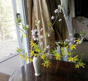 yellow bramble bush flower Pennsylvania spring weeping cherry cut vase pink flowering tree
