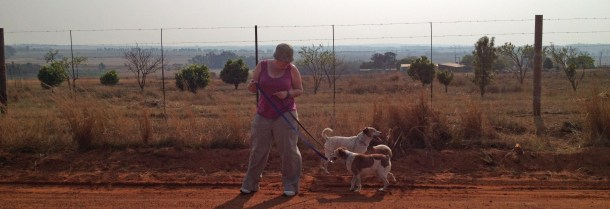 expat life Pretoria volunteering in South Africa donkey rescue
