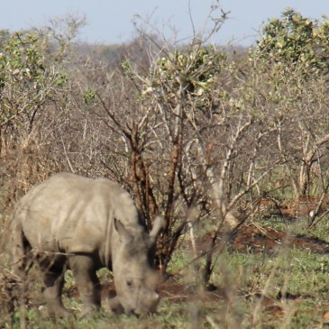 expat life pretoria South Africa wildlife baby rhino