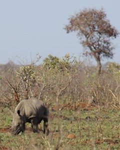 expat life pretoria South Africa wildlife baby rhino