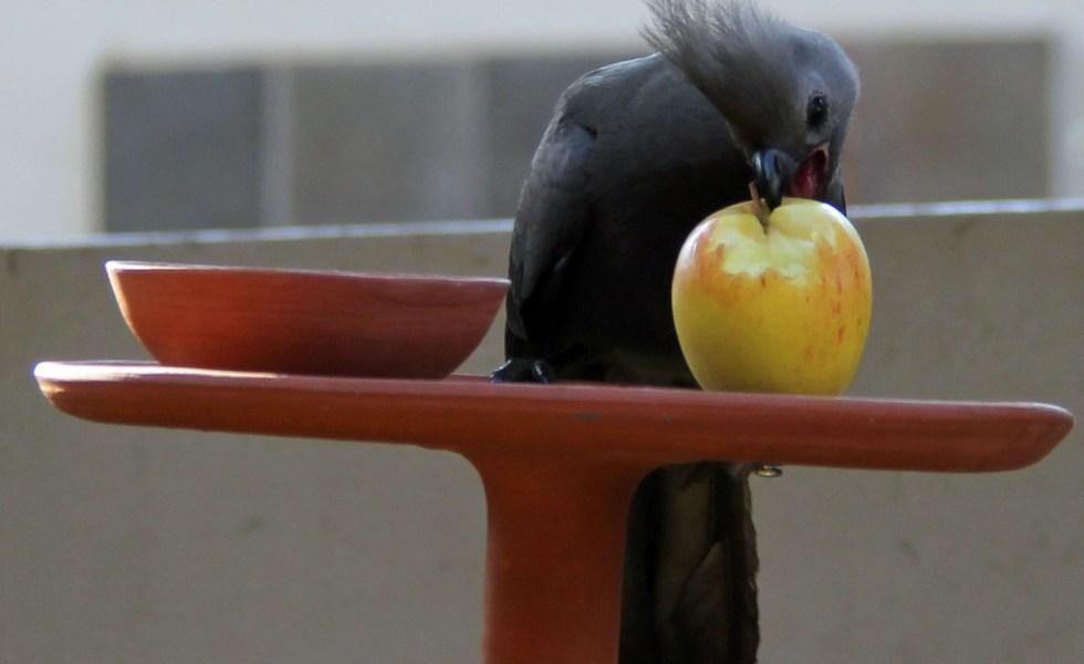 expat life Pretoria South Africa travel birding Africa
