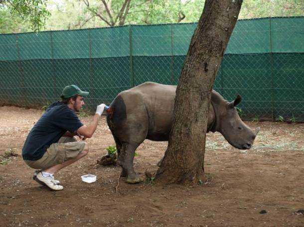 expat life Pretoria South Africa travel rhino conservation