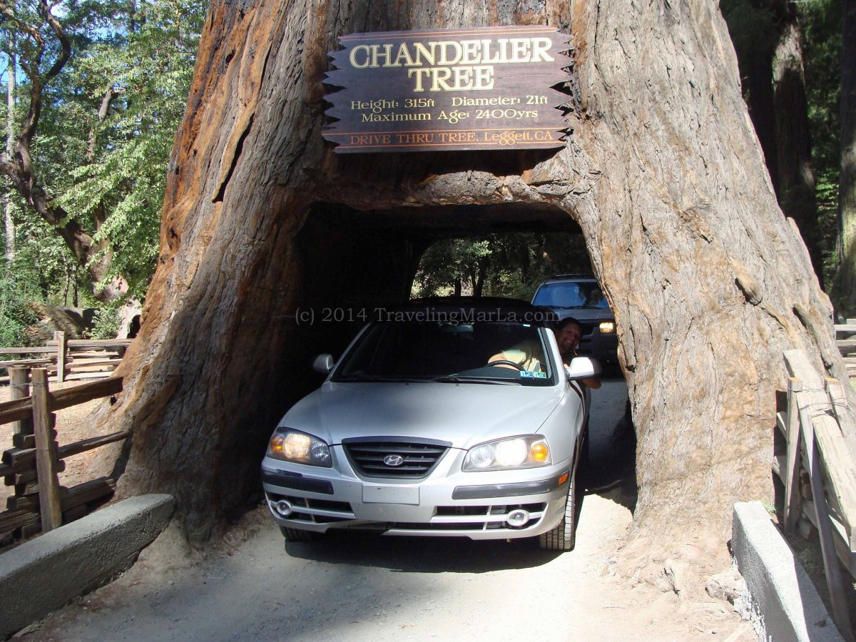 The first time you drive through a tree marla sink druzgal arubaitofo Images