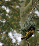 travel birds Africa