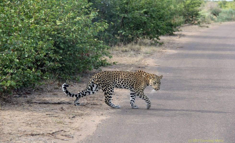 Jonathan Kariara poem Leopard tree Africa