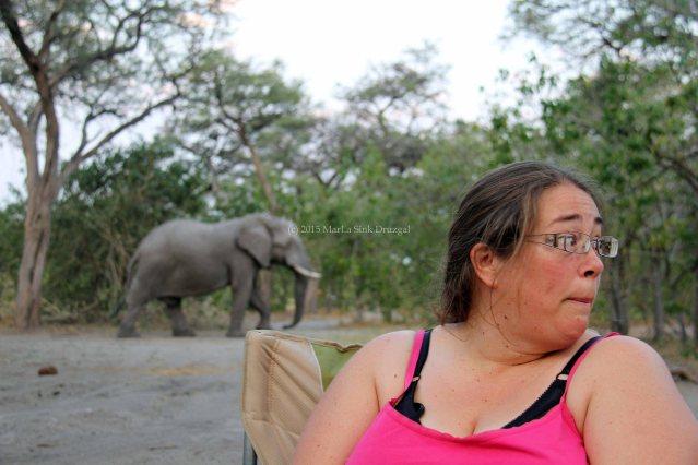 africa travel botswana
