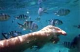 Belle Mare Snorkel17