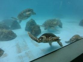 Churaumi - Turtle tank9