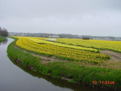 Flower Fields03