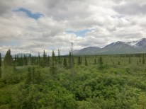 Wild expanse of forests