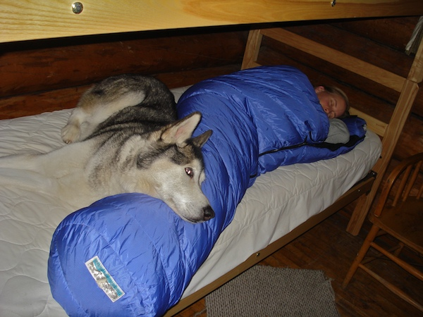 Cute dog on my sleeping bag.