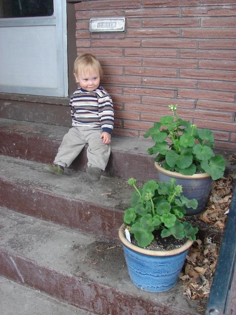 Anders' geraniums