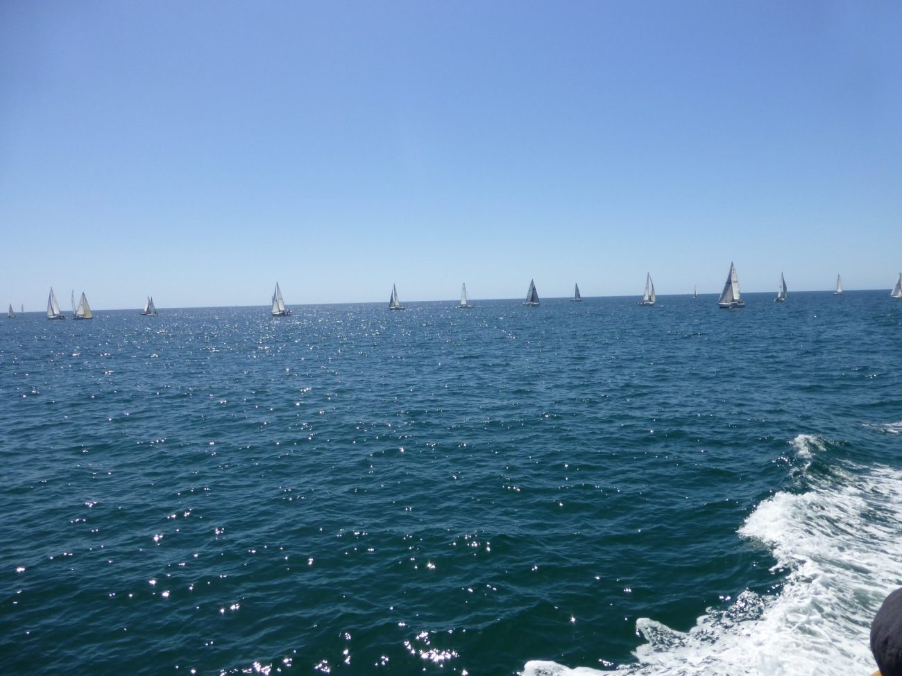 Sailboats from the whale watching