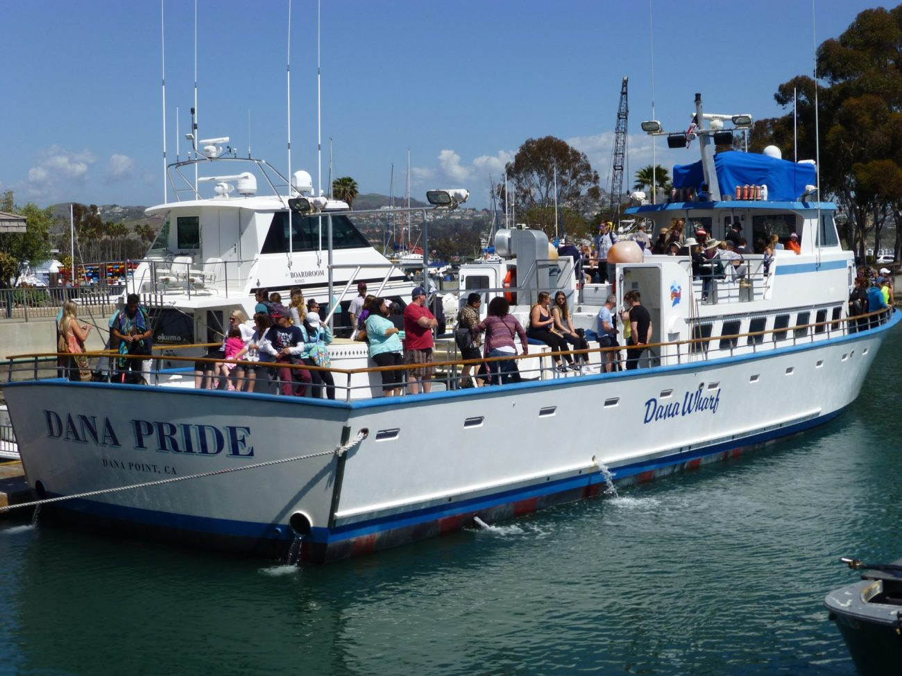 Whale watching in Dana Point from the Dana Pride boat.