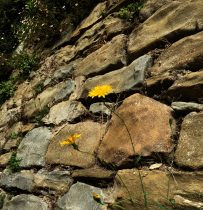 old walls on day hike near Florence: Renaissance Ring