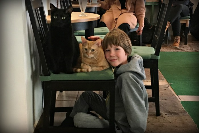 Feline Fun at the Cat Caffé