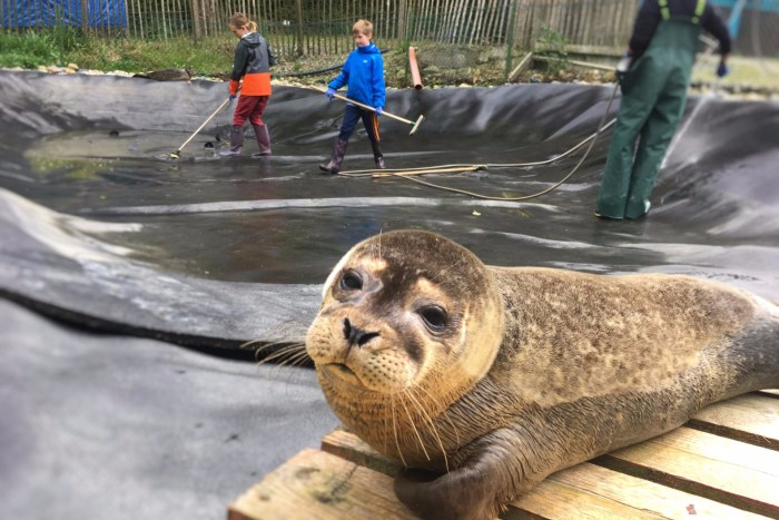 Volunteer at Seal Rescue Ireland