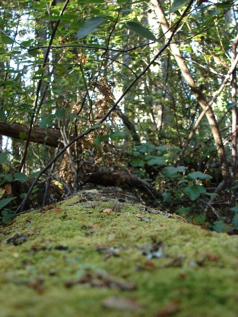 Lichen on a fallen tree trunk