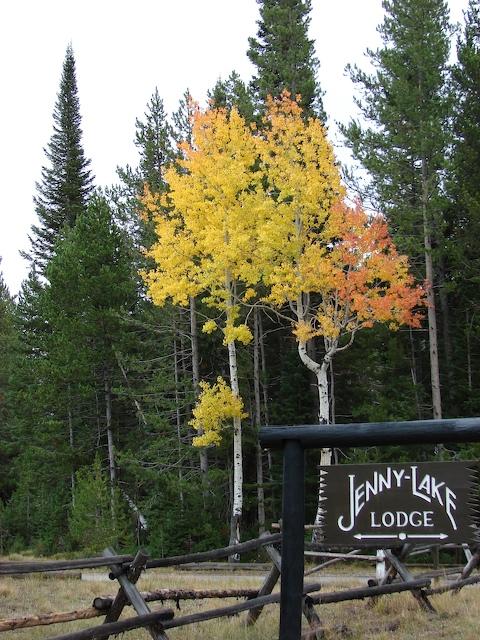 Aspens at the entrance to Jenny Lake Lodge