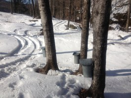 maple sugaring 4