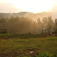 Mountains, Biriyani and a Road to Yercaud