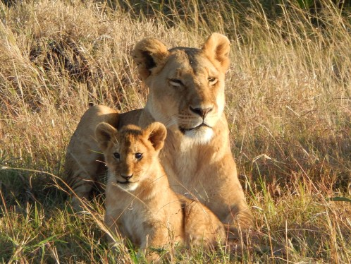 I traveled to see unique wildlife in Kenya. This is a lioness and her cub