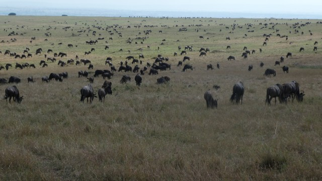 Visit Kenya and Tanzania and experience the great migration