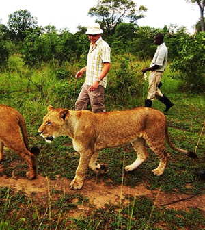 Walk with lions in Zambia, Africa