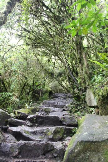 Climb Up Machu Picchu Mountain