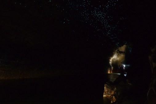 Glowworms in Waitomo Caves