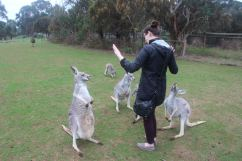 Attach of the Kangaroos