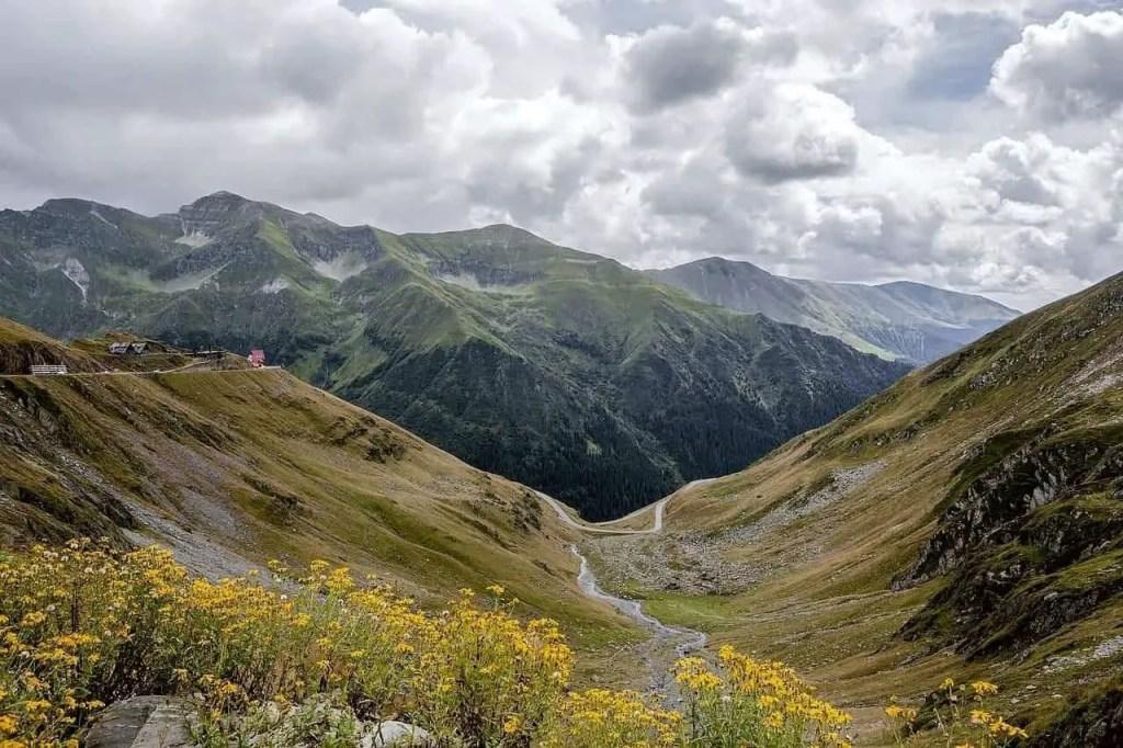 Small yellow wildflowers on the Fagaras Mountains in Transylvania