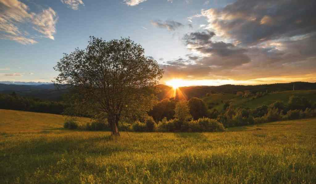 Sun setting behind the green hills of Transylvania with a small tree in the foreground.