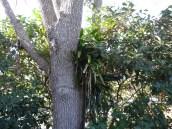 UUC Sarasota 30