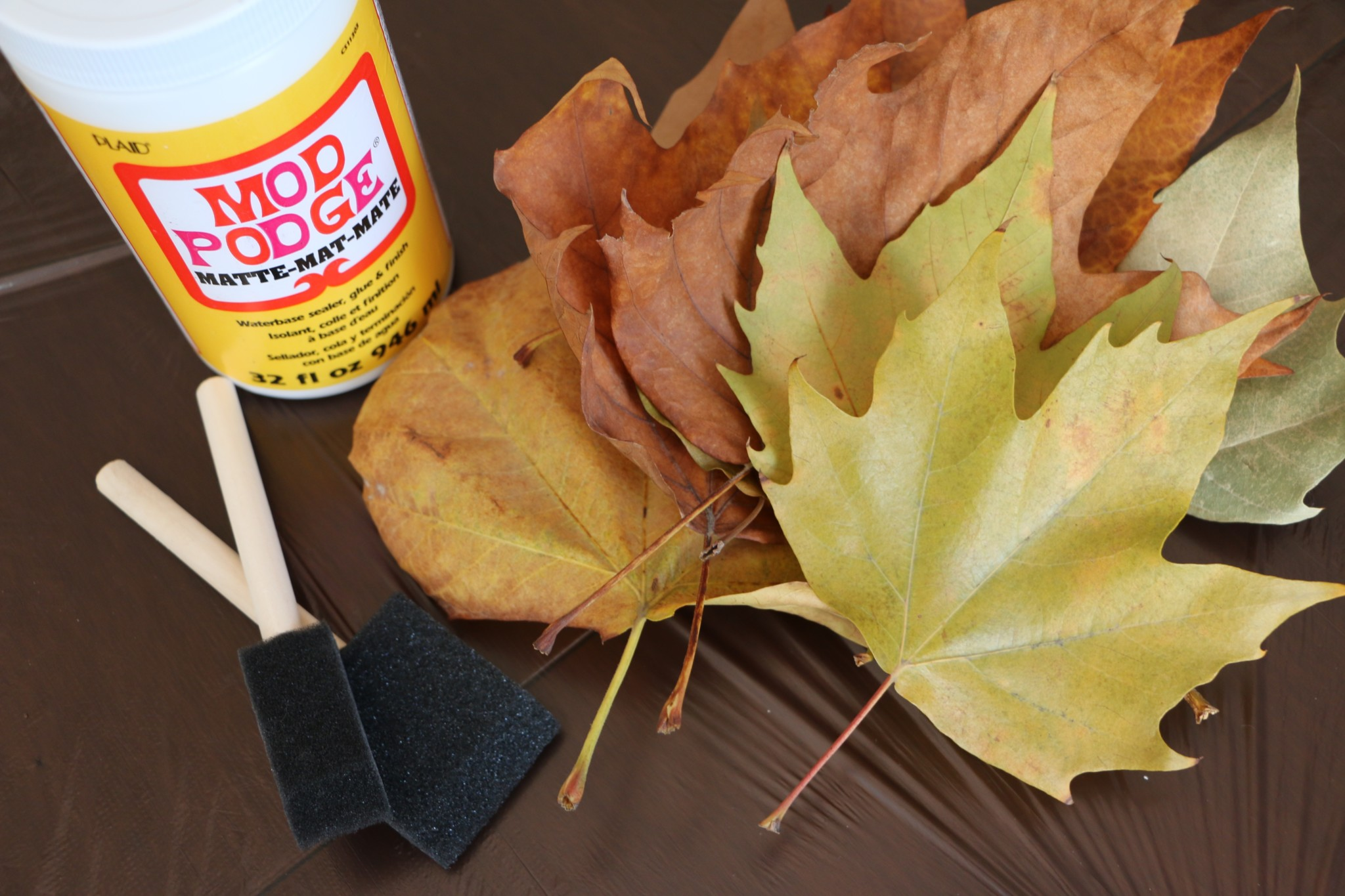 How to Preserve Fall Leaves│Mod Podge Craft