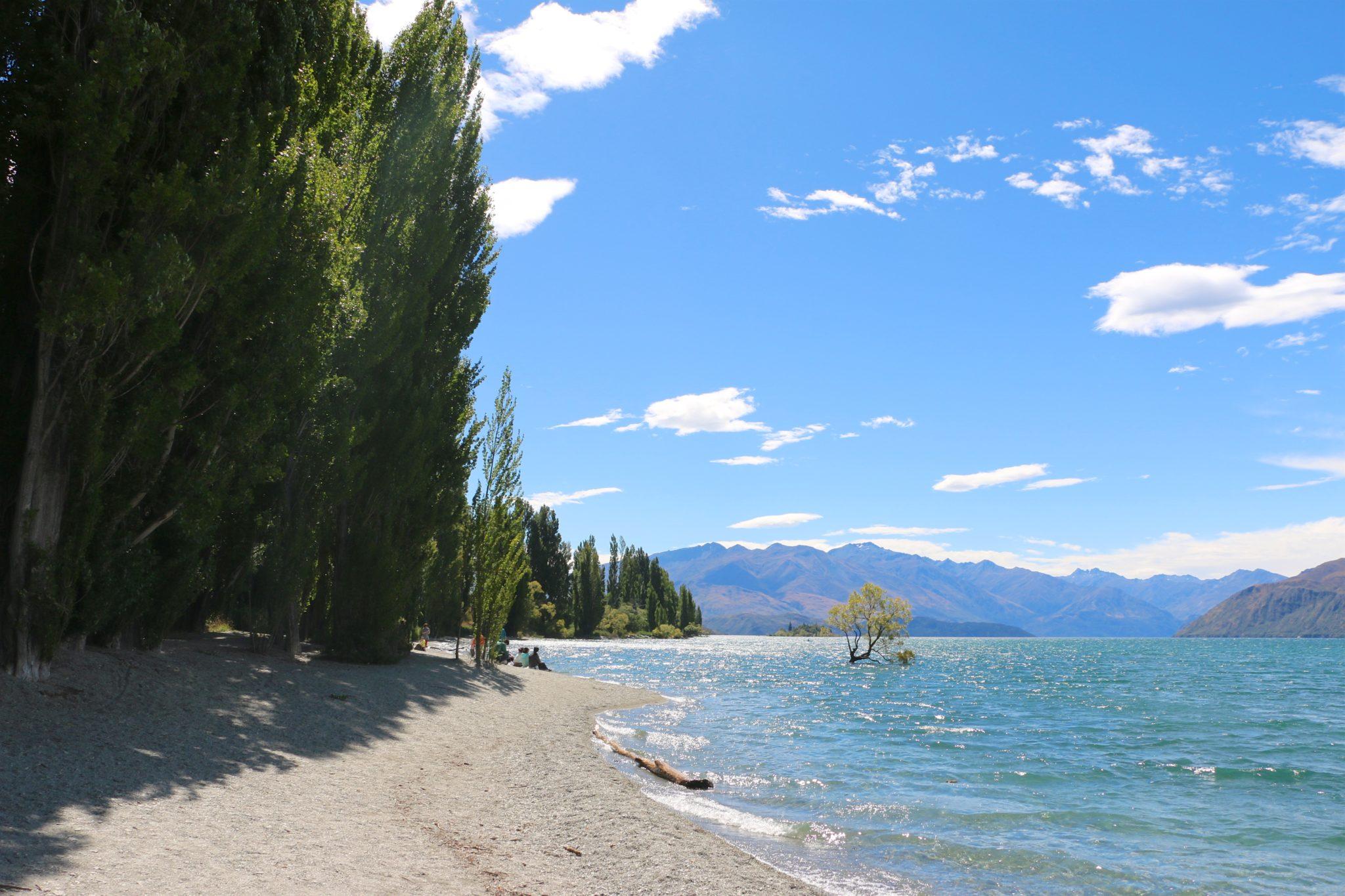 The Lone Tree of Wanaka Lake