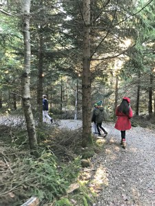 Rathwood-Santa Train, in the Forest, Co. Wicklow, Ireland