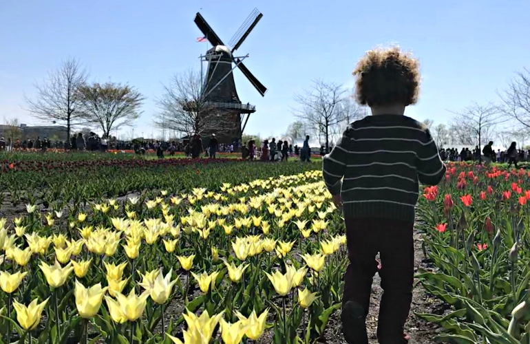 Tulip time for families, toddler running through the tulip fields at Windmill Island Garden