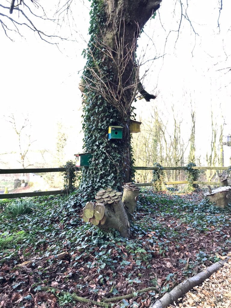 Fairy houses on a tree at Gracehill House near the Dark Hedges, place for babies and toddlers to play