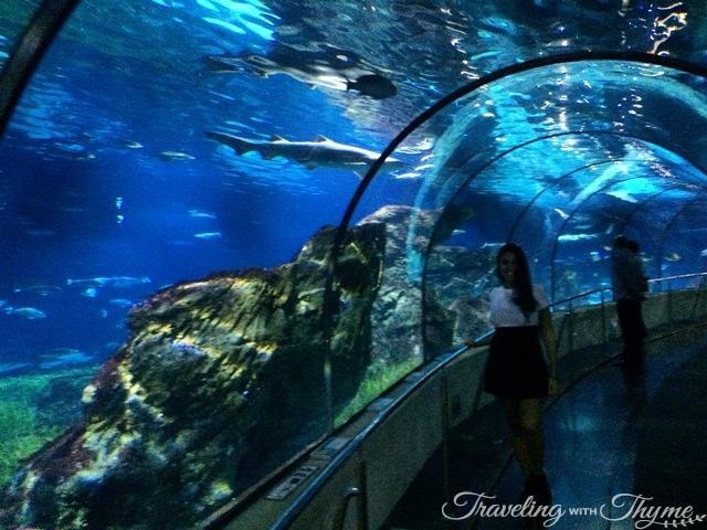 Barcelona Bus Turistic Tour Aquarium Tube