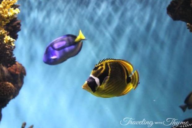 Barcelona Aquarium Dory Fish