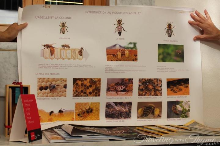 Atelier du Miel Beehive Beekeeping Workshop